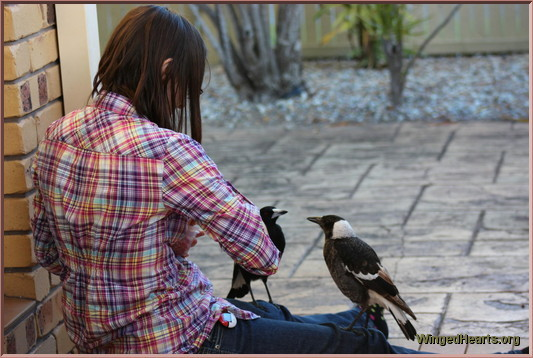 Vic with mummy magpie & Pingu