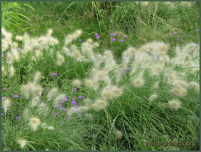 Wild grasses spring up along the roadside